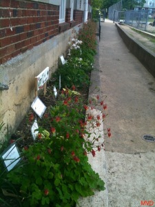 Hummingbird Flowers - 4 of 13_new